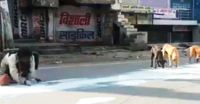 Homeless man drank the spilled milk on road along with street dogs